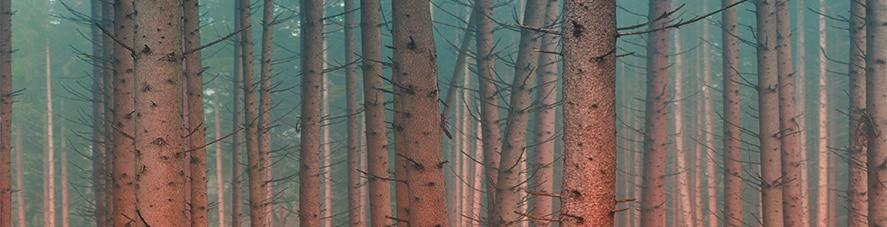 Hsing-i Wood Fist
