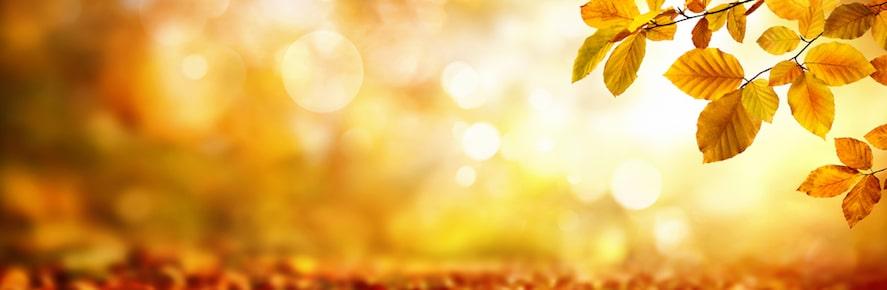 Kumar Frantzis: An Informal Discussion on Taoist Meditation – Part 1
